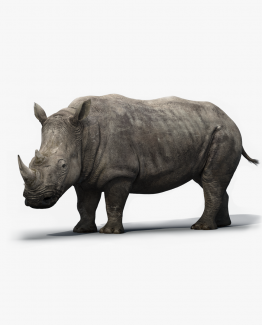 rhino rigged
