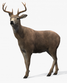 Deer rigged 3d