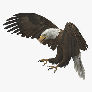 3D-American-Bald-Eagle-Animated1