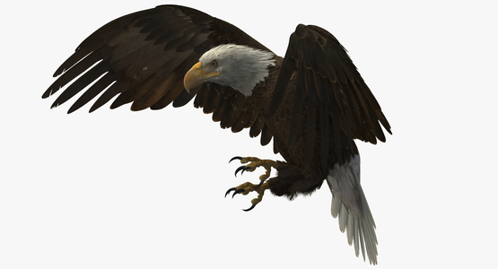 3D-American-Bald-Eagle-Rigged-model1