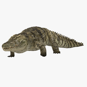 3D-Crocodile-Animated-model1