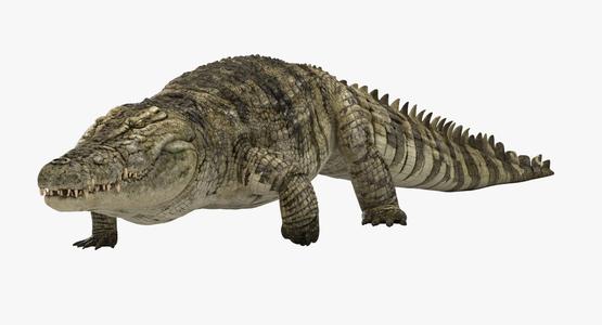 3D-Crocodile-Animated-model1