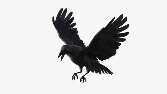 3D-Crow-Animated1