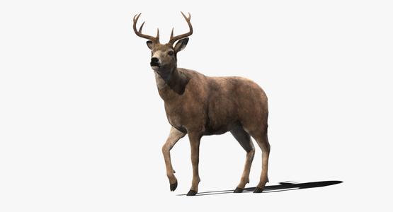 3D-Deer-Animated-Fur-model1