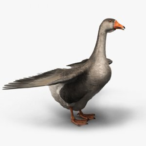 3D-Domestic-Goose-model1