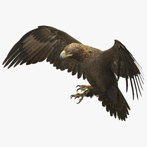 3D-Golden-Eagle-Rigged1