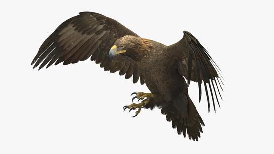 3D-Golden-Eagle-Rigged1
