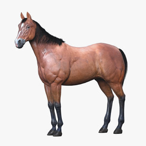 3D-Horse-Animated1