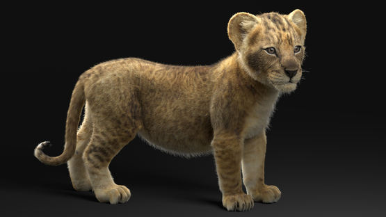 3D-Lion--Cub-Rigged1