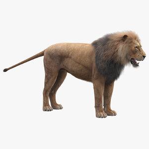 3D-Lion-Fur1