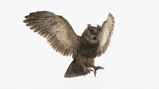 3D-Owl-Animated-model1