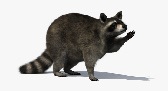3D-Raccoon-Rigged1