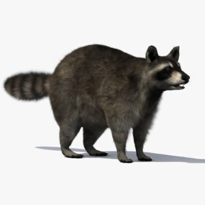 3D-Raccoon1