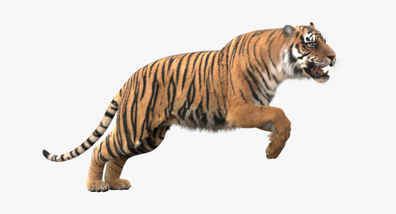 3D-Tiger-Animated-Fur-model1