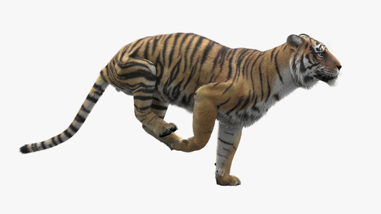 3D-Tiger-Animated-model1