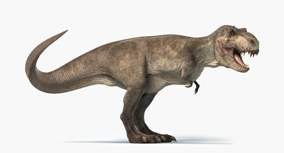 3D-Tyrannosaurus-Rex-Rigged-model1
