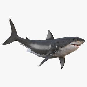 3D-White-Shark-Animated1