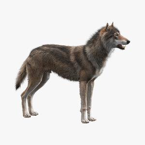 3D-Wolf1