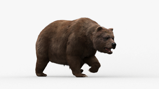 3D-model-Bear-Animated1