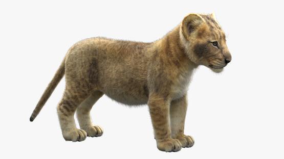 3D-model-Lion-Cub1