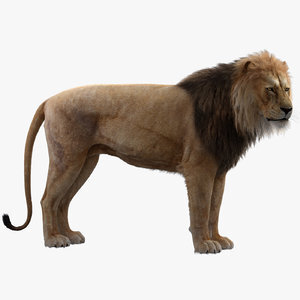 3D-model-Lion-Rigged1