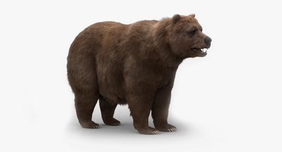 Bear-Fur1