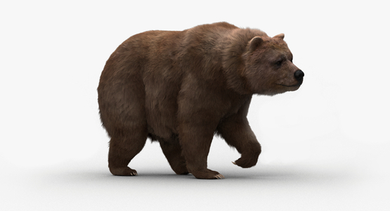 Bear-Rigged-Fur1