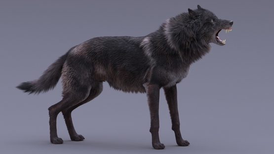Black-Wolf-Rigged-3D1