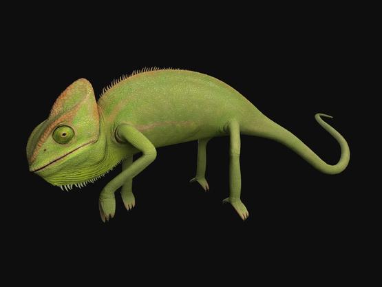 Chameleon1