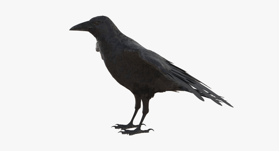 Crow-3D-model1