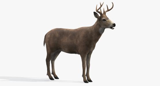 Deer-Fur1