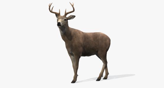 Deer-Rigged-Fur1