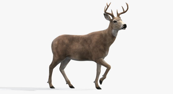 Deer-Rigged1