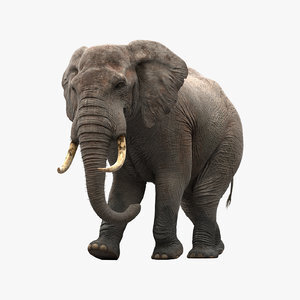 Elephant-Animated1