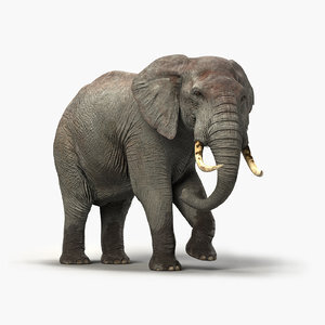 Elephant-Rigged-3D1