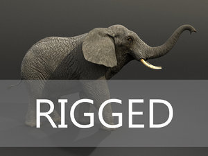 Elephant-Rigged1