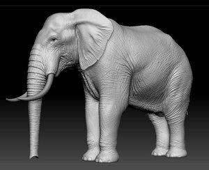 Elephant-in-Zbrush1
