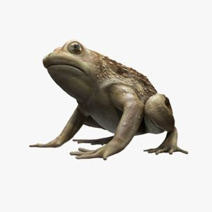Frog-RIGGED1