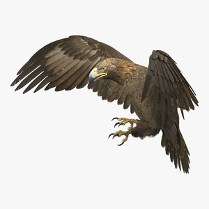 Golden-Eagle-Animated-3D-model1