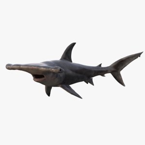 Hammerhead-Shark-Rigged1