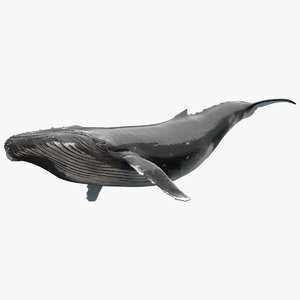 Humpback-Whale-Rigged1