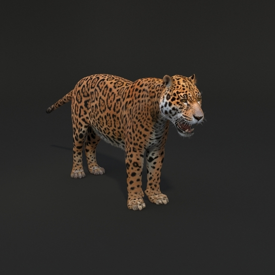 Jaguar-Fur1