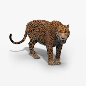 Jaguar-Rigged1