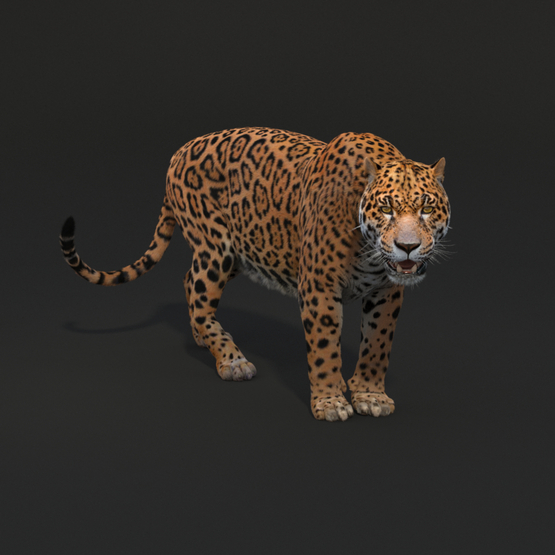 Jaguar-Rigged1