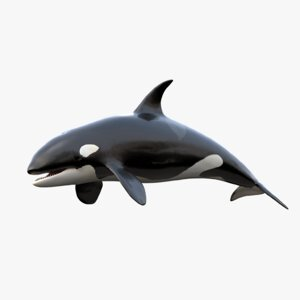 Killer-Whale-Rigged1