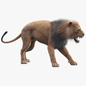 Lion-Animated-Fur-3D-model1