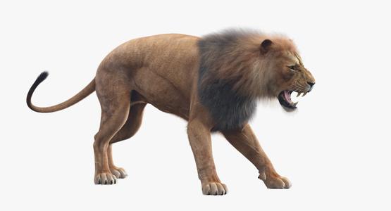 Lion-Animated-Fur-3D-model1