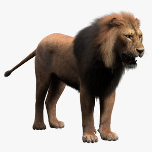 Lion-Fur1