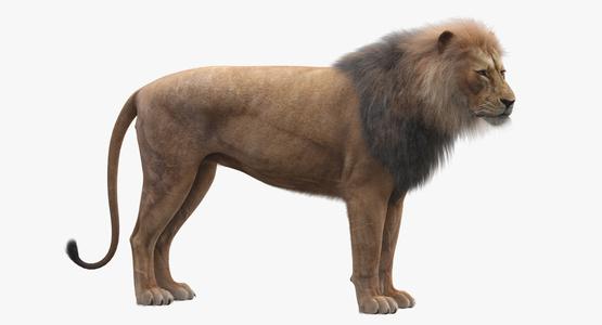 Lion-Rigged-Fur-3D-model1