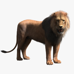 Lion-Rigged-Fur1